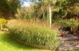 Изгороди и ширмы из декоративных злаков