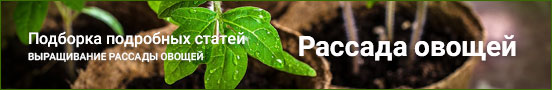 Статьи о выращивании рассады овощей