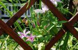 Многофункциональная опора для растений, или Как эффектно спрятаться от соседей