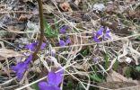 В лесу встретил такой цветок