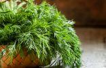 7 хитростей выращивания укропа для длительного употребления зелени