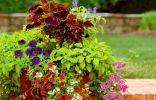 Лучшие комнатные растения для контейнерных композиций в саду