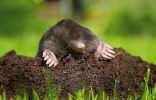 «Кротомет» — гуманный и безопасный способ избавиться от кротов