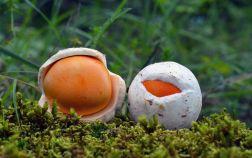 Малознакомые, но вкусные и полезные грибы