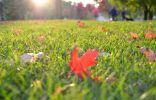 Осенняя подготовка газона к зиме