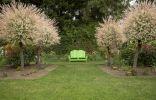 Пестролистные ивы в моём саду — красивы в любое время года
