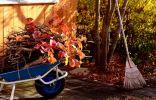 Осенние работы в саду и огороде, о которых я никогда не забываю