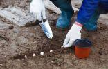 Что посадить под зиму? 20+ культур для подзимних посевов