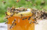 Практический опыт пчеловода — от покупки пчёл до первого мёда