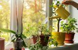 10 главных правил полива комнатных растений