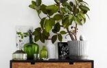 10 лучших быстрорастущих комнатных растений