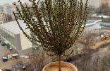 Растение Аравийской пустыни — помогите атрибутировать