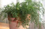 9 лекарственных растений, которые нужно выращивать дома зимой