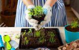 Лунный календарь садовода и огородника на апрель 2020