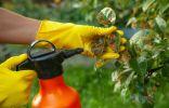 «Тамир биозащита» против болезней растений