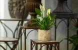 Как выбрать подставку для комнатных растений?