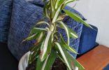 Помогите пожалуйста опознать растение