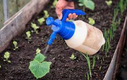 Объясняем почему важно правильно готовить раствор удобрений