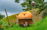 7 сортов самых крупных тыкв и рекомендации по их выращиванию