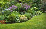 Правила подкормок декоративного сада и цветников