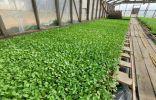 Как повысить стрессоустойчивость растений?