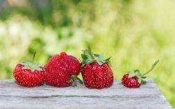Почему деформируются ягоды у земляники садовой?