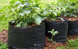 Картофель в мешках, бочках, пакетах и ящиках — урожай для ленивых