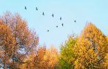 Летят перелетные птицы… Какие и куда?