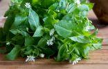 Звездчатка, или мокрица — едим и лечимся полезным сорняком