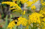 Как черные осы помогли нам в борьбе против личинок вредителей