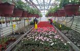Как ухаживать за комнатными растениями осенне-зимний период?