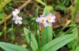 Ещё один самый последний цветок