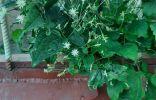 Подскажите, как называется растение?