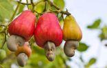 15 плодов, которые мы едим, но не знаем, как они растут