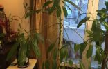 Чего требуют растения?