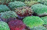Ароматная зелень на подоконнике