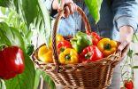 Какие сладкие перцы самые полезные, и что о плодах расскажет их цвет?