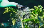 Волшебная лейка — простое решение для садоводов