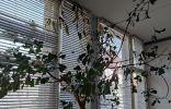 Помогите определить растения