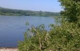 Что за кусты растут по берегам реки Томь в Новокузнецке?