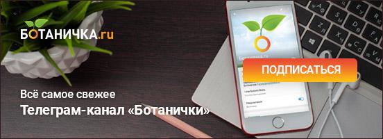Телеграм-канал Ботанички
