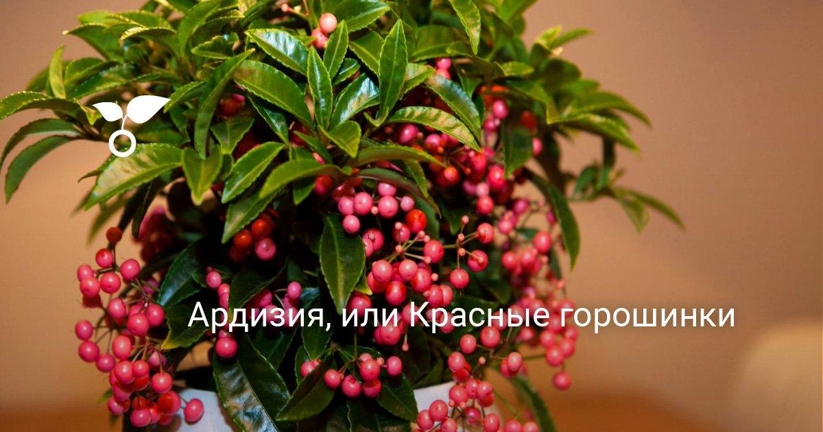Декоративный цветок с ягодами