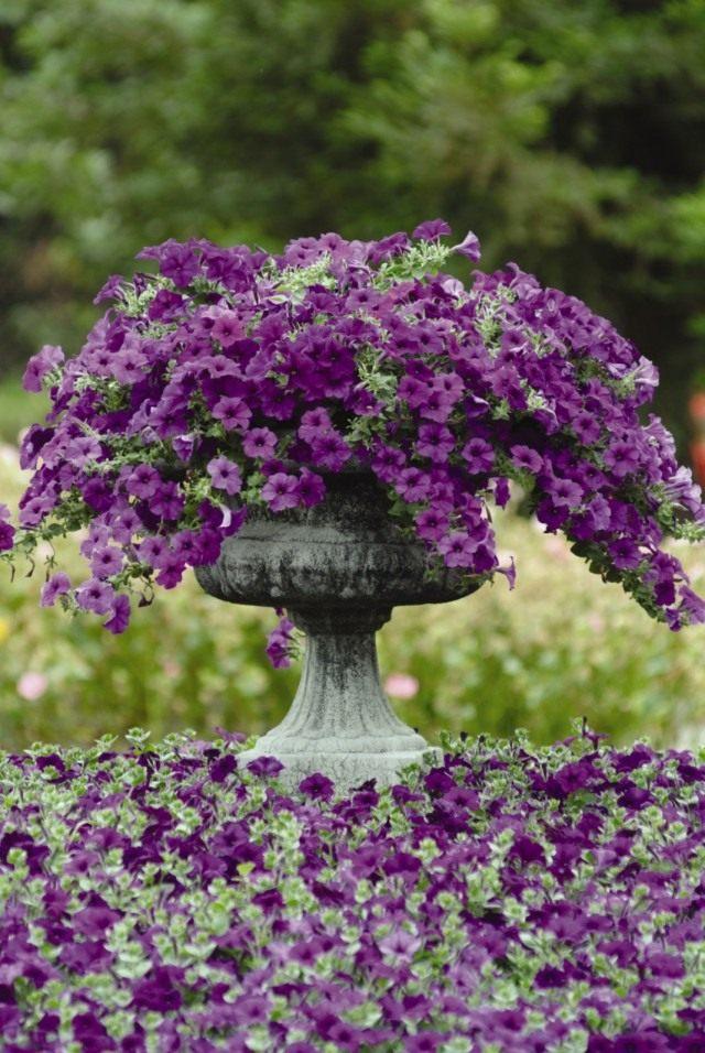 Клумба и вазон с петуниями