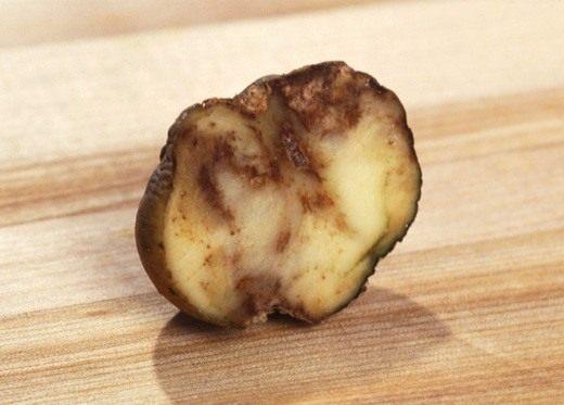 Болезнь плодов (Fruit disease)