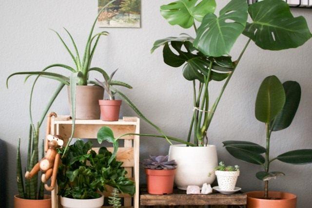 Монстера и другие растения в интерьере