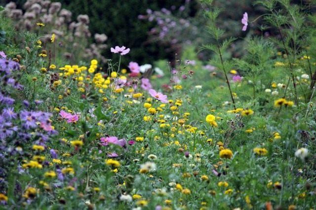 Высаживайте медоносные цветы для привлечения полезных насекомых