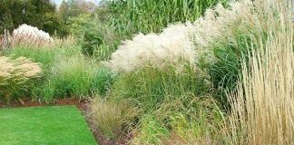 Сад злаковых трав