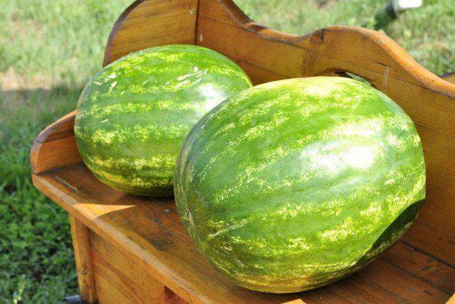 Арбуз — подарите себе сахарное лето