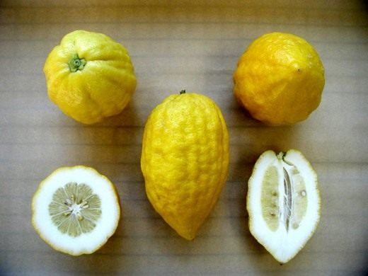 Этрог (Greek citron)