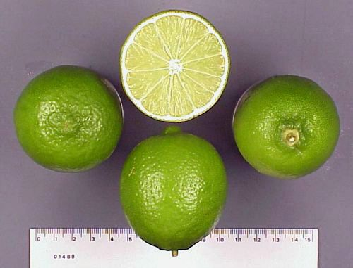 Персидский лайм (Persian lime)